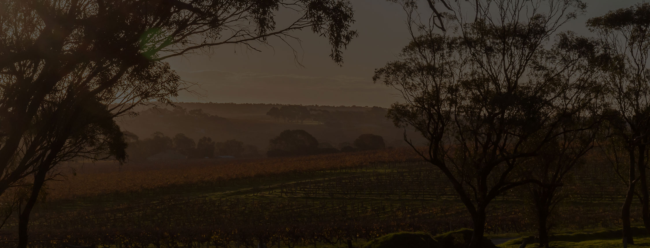 A landscape image of a wine vineyard sunset
